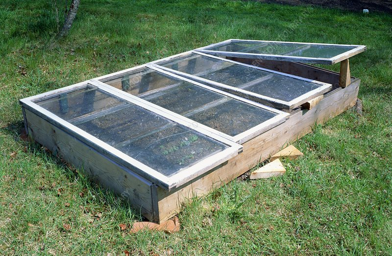 Plants growing in cold frames