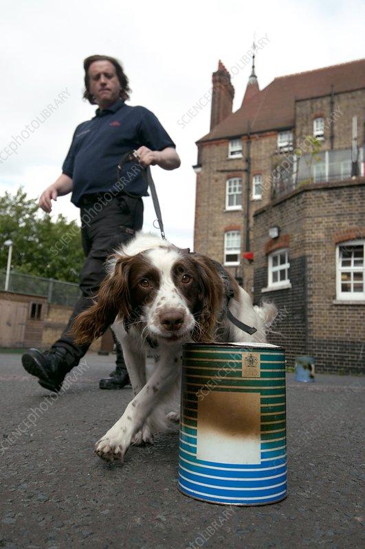 Fire investigation dog and handler