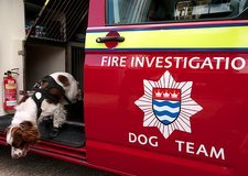 Fire investigation dog