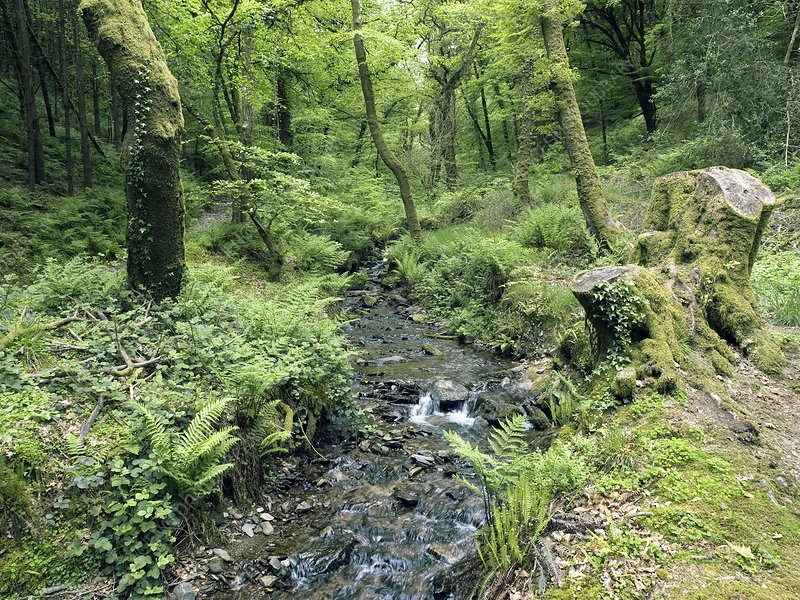 Stream and woodland in Devon