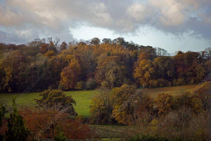 Taw Valley in autumn