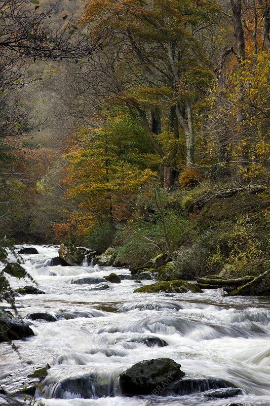 River Lyn in autumn