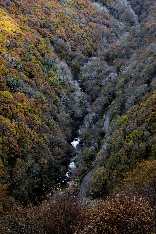Lynmouth Valley in autumn