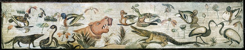 Nile flora and fauna, Roman mosaic