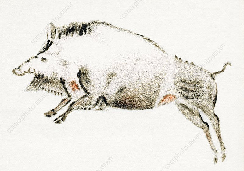 Cave painting of a boar, artwork