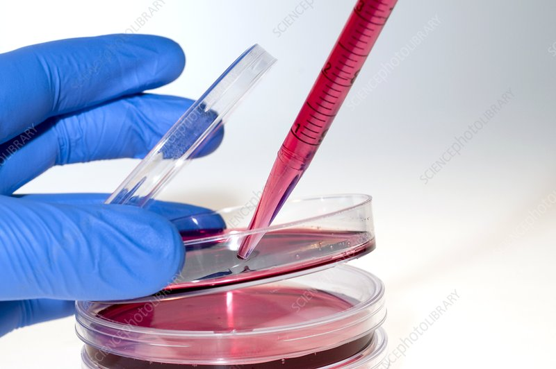 Cell culture preparation