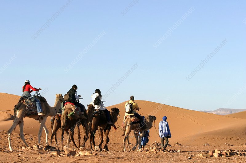 Tourists riding camels, Morocco