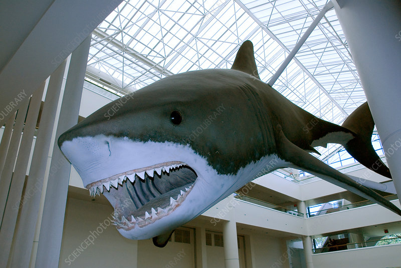 Extinct shark exhibit