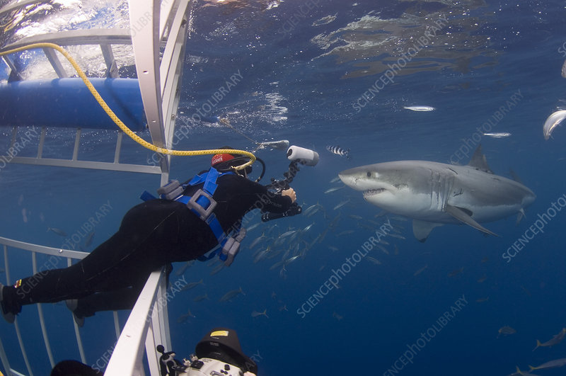 Photographer Getting Close to Great White