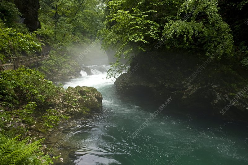 The Radovna river in Slovenia