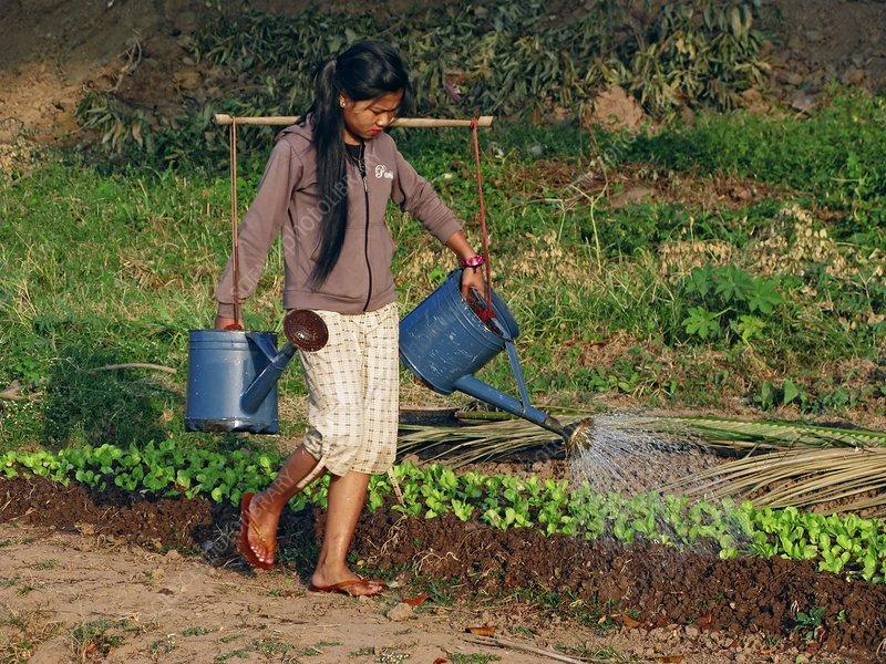 Watering vegetable garden laos stock image c003 8809 for Watering vegetable garden