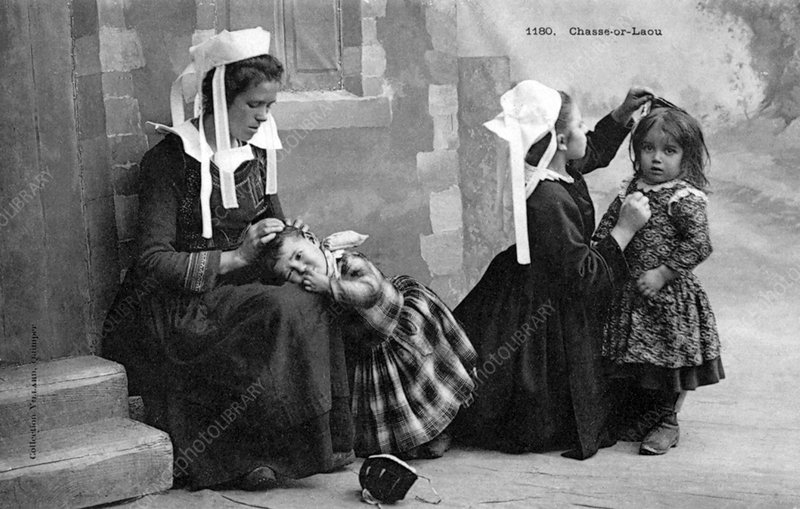 Head lice removal, historic image
