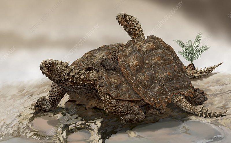 Prehistoric turtles