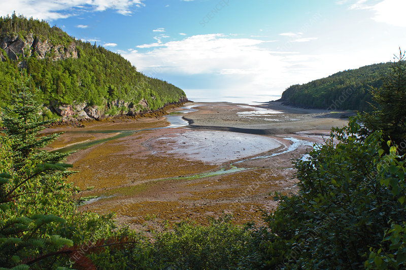 Low Tide in Bay of Fundy