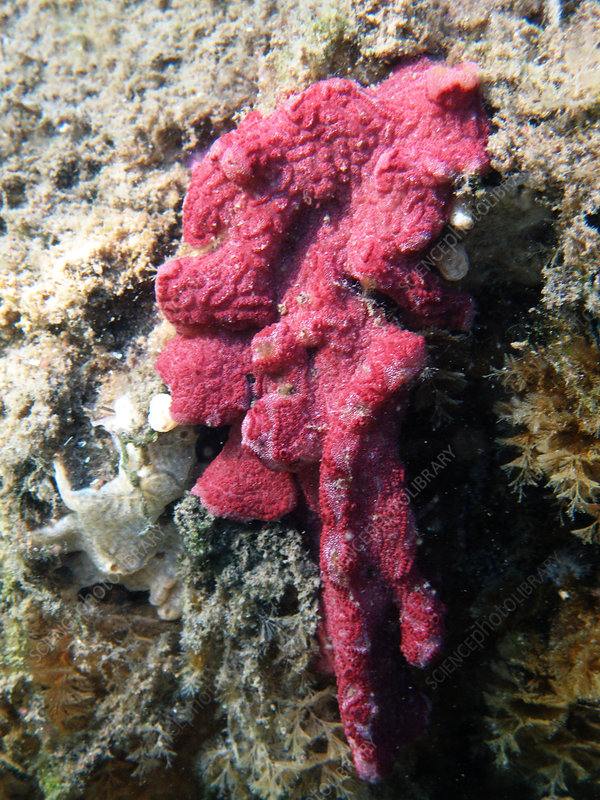 Close-up of Live Sponge