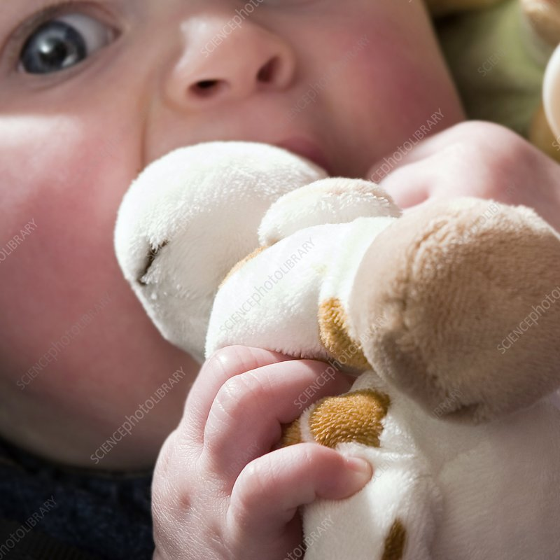 Teething baby holding a stuffed toy