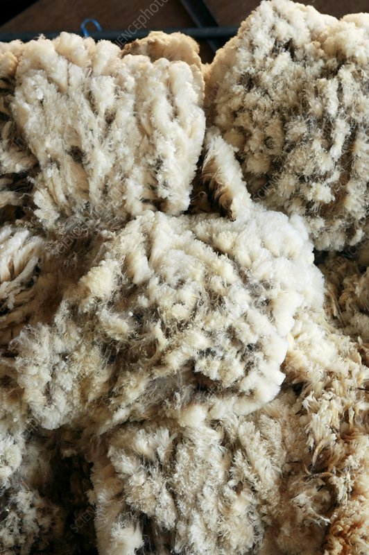 Sheep fleeces