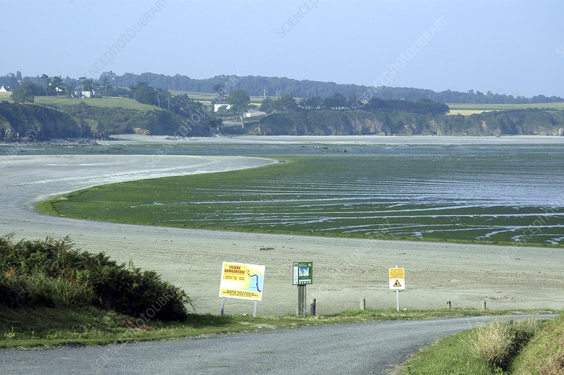 Algae covered beach, Brittany, France