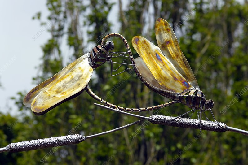Sculpture of two dragonflies