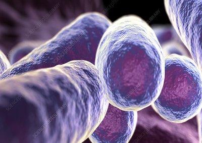 E. coli bacteria, artwork