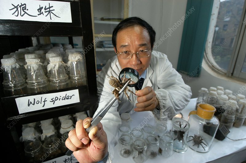 Spiders as biological pest control, China