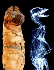 Mummified Ancient Egyptian dog and X-ray