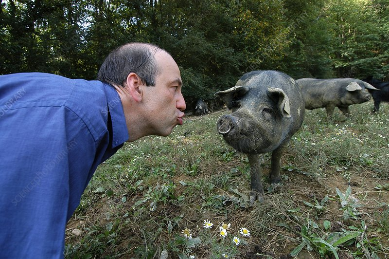 Pig squealing contest, France