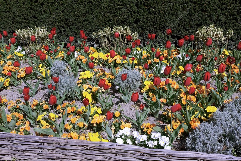 Mixed flowerbed in Spring