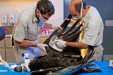Andean Condor Conservation Project