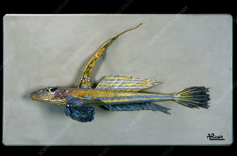 Historical model of a fish