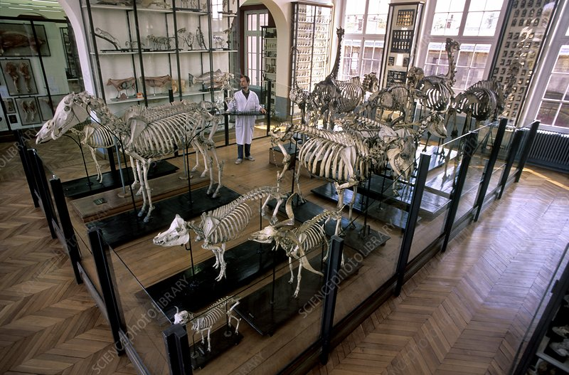 Veterinary museum, France
