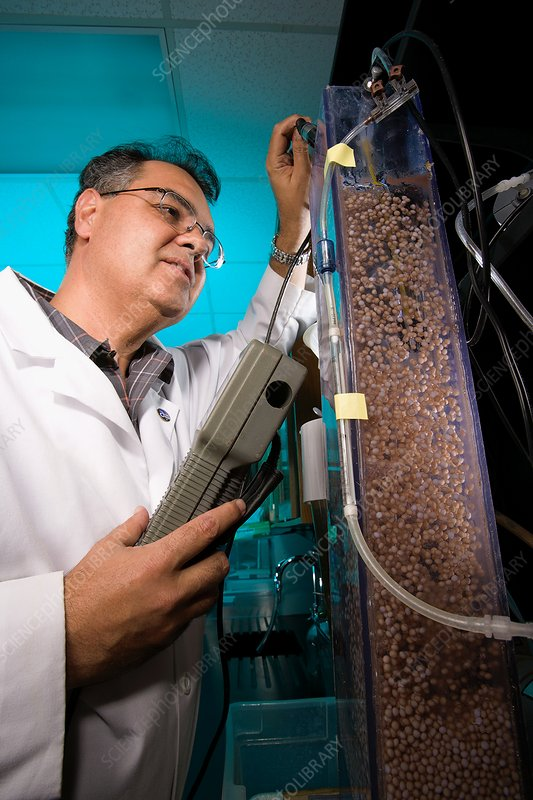 Soil-cleaning bacteria research