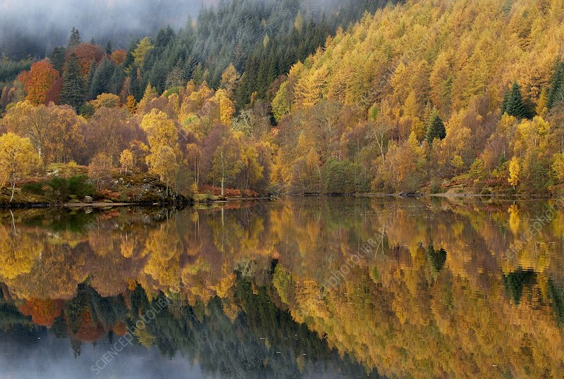 Reflections of autumn colours in loch