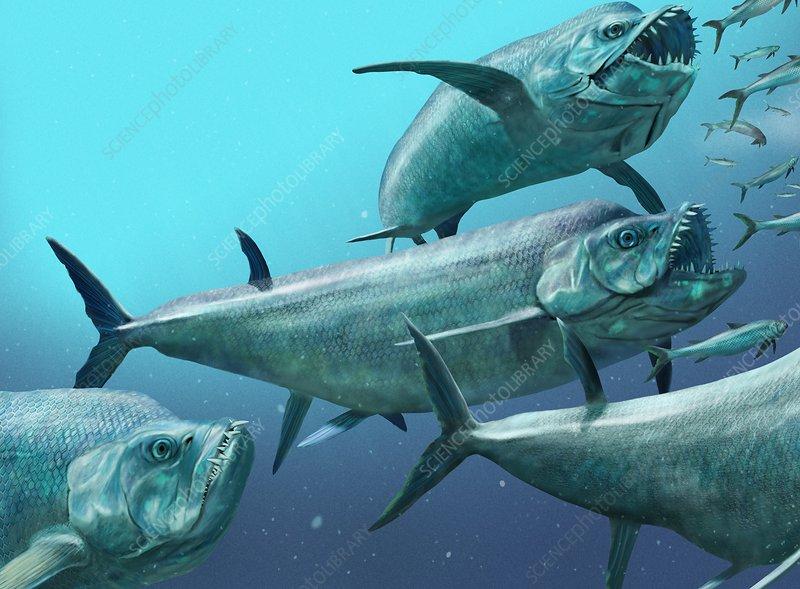 Xiphactinus prehistoric fish, artwork - Stock Image - C004 ...