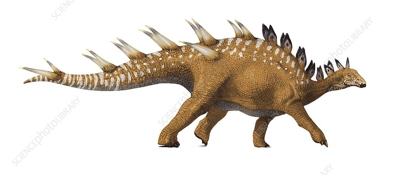 Kentrosaurus, artwork
