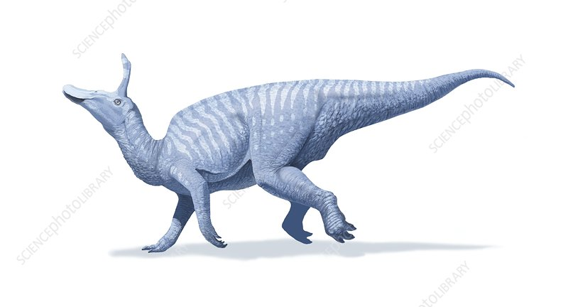 Tsintaosaurus, artwork