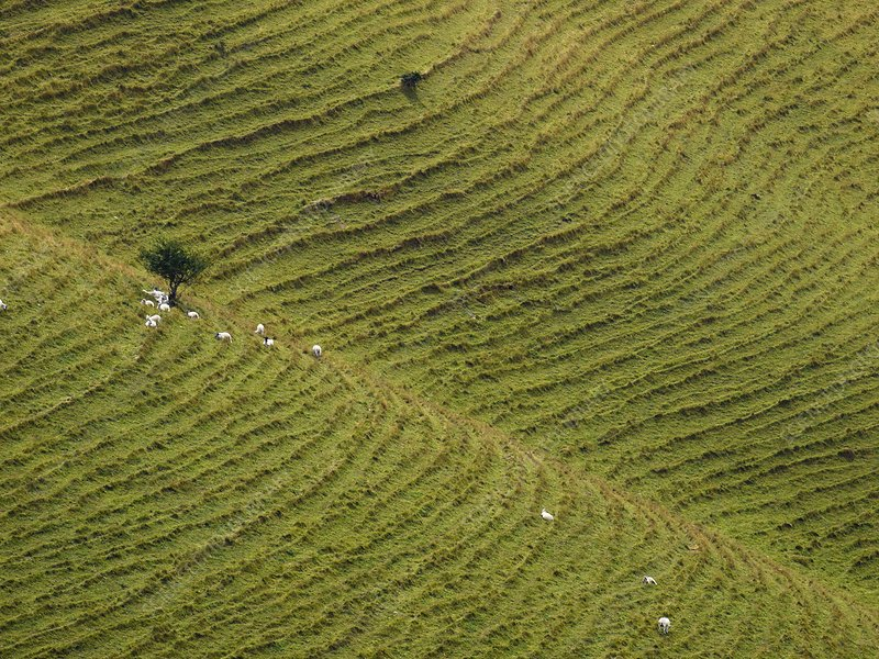 Sheep grazing on steep slopes