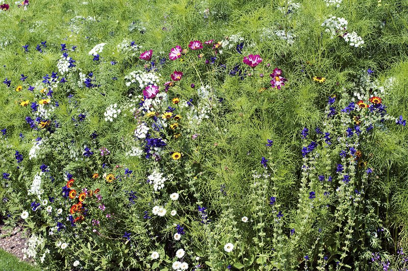 Mixed flowerbed in Summer