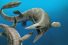 Tylosaurus extinct marine reptile