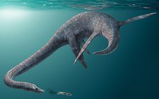 Styxosaurus extinct marine reptile