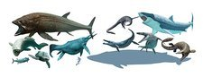 Prehistoric marine animals, artwork