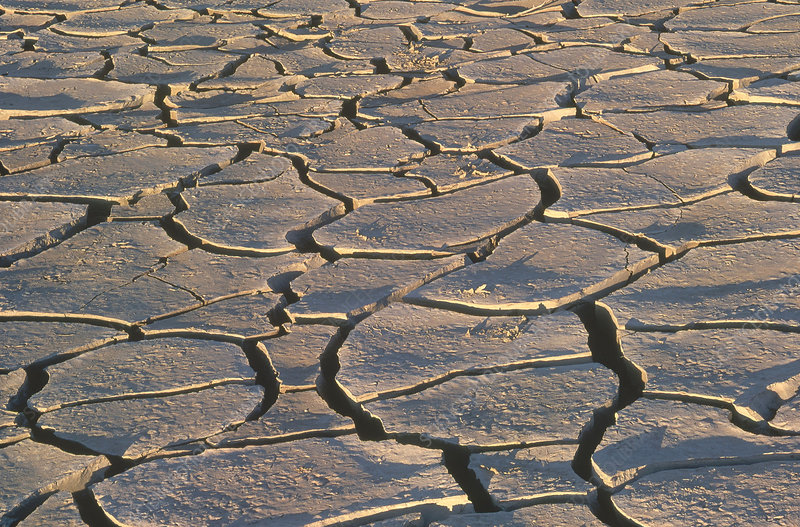 Cracked Mud in Namibia