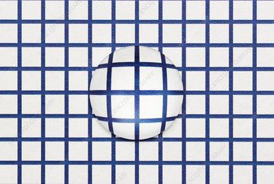 Optical Distortion, Inc.