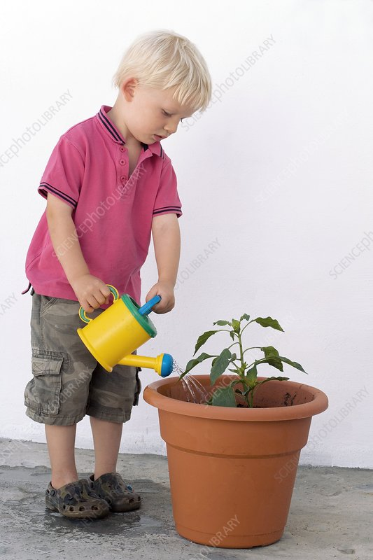 Boy watering a potted plant