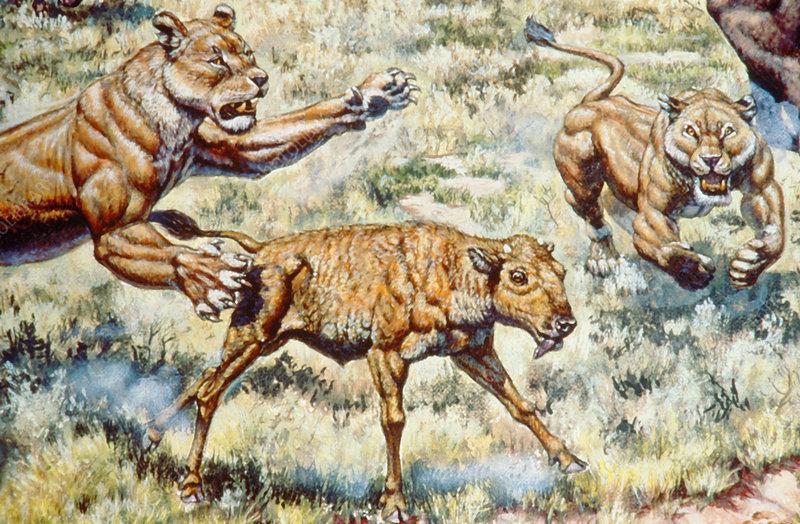 http://www.sciencephoto.com/image/112245/530wm/C0048034-Pleistocene_Mammals-SPL.jpg