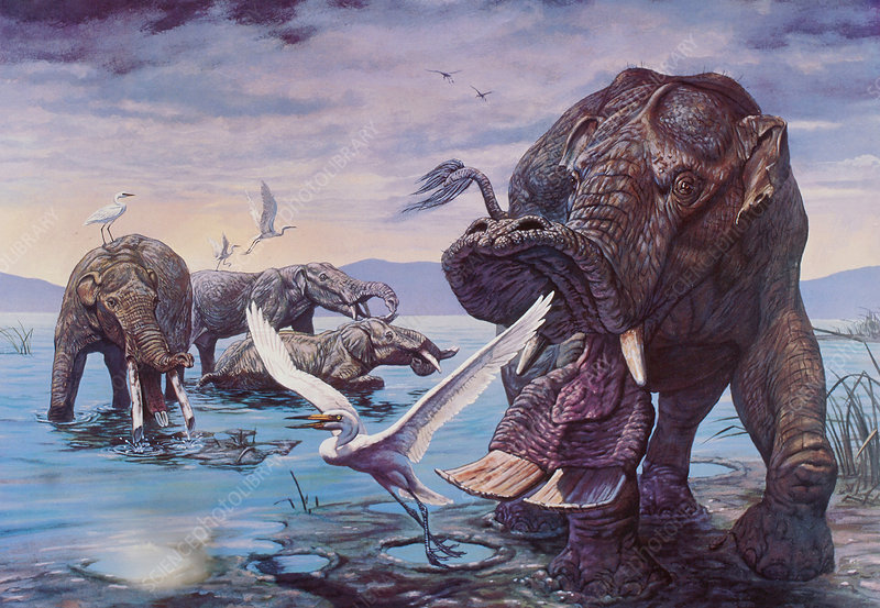 Early Mastodonts