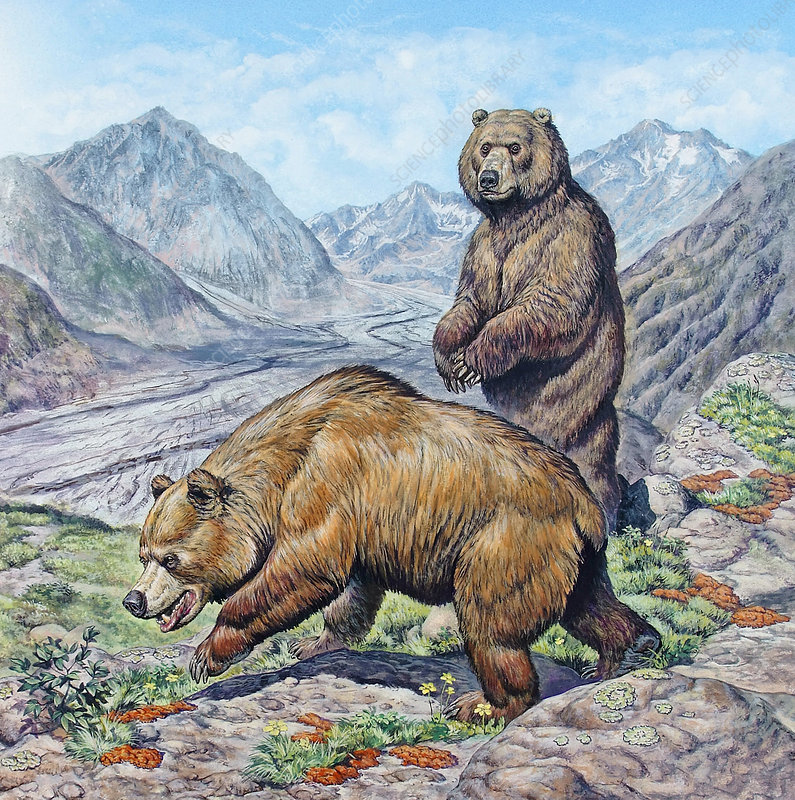 Extinct Cave Bear