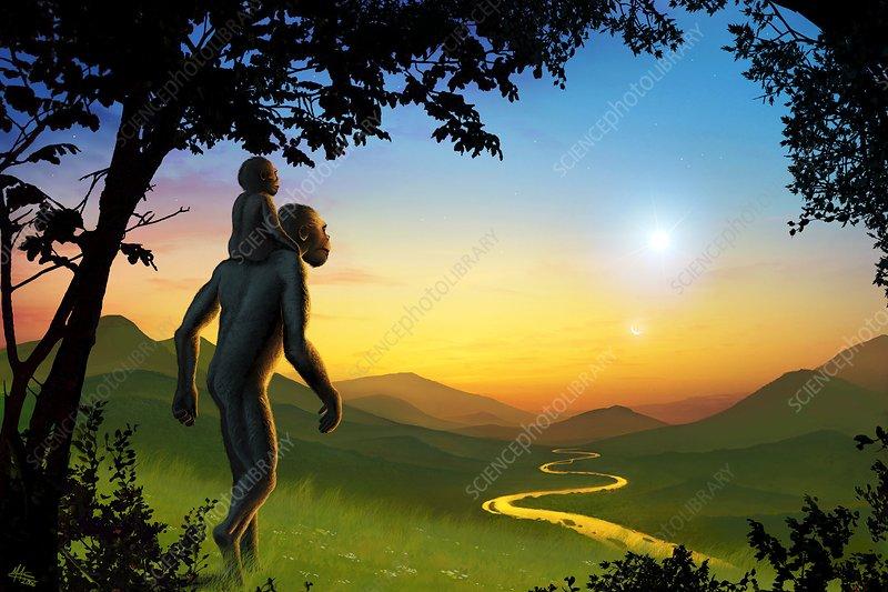 Human evolution and supernova, artwork