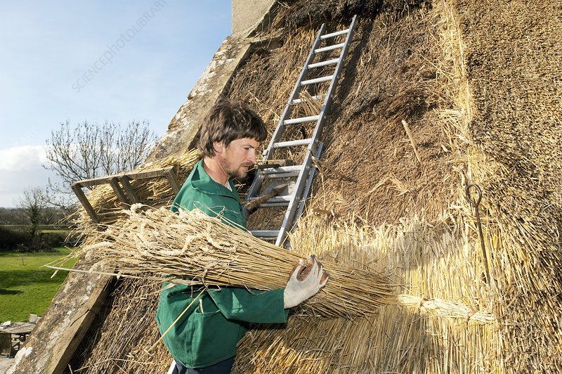 Re-thatching a cottage roof