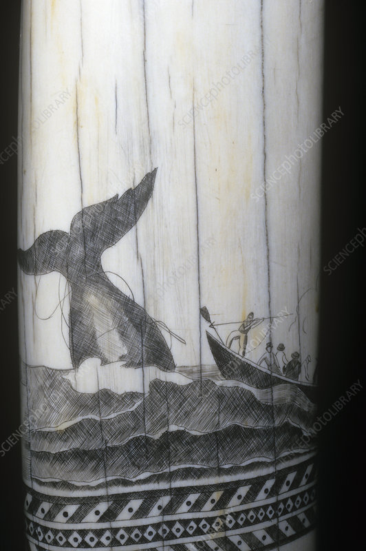 Scrimshaw carving of a whaling scene